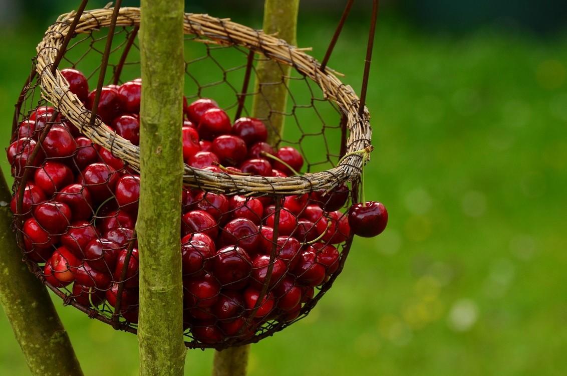 Nalewka wiśniówka